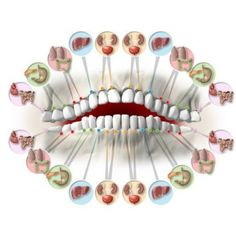 How Your Teeth Predict Different Organs Health! There is a link between the state of organs inside and teeth, like for example the upper and lower incisors a. Hand Reflexology, Tooth Pain, Health Heal, Acupressure Points, Body Organs, Alternative Health, Dental Health, Massage Therapy, Health Problems