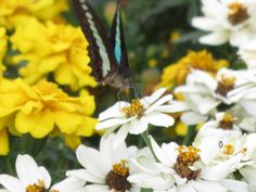 1 butterfly fly near the fountain in Yamashita park Yokohama. it is not spring today :D