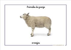 Fichas de infantil: Vocabulario básico con animales de granja Farm Unit, Busy Bags, Kangaroo, Lamb, The Unit, Angel, Child Psychotherapy, Animals, Play Therapy