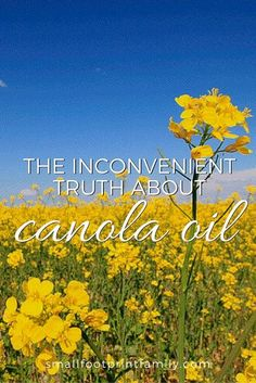 """They say canola oil is """"heart healthy"""" and similar to olive oil. Nothing could be further from the truth. Canola oil is, in fact, quite bad for you. Here's why... #nogmos #gmofree #organicfarming #realfood #organic #sustainableagriculture #nutrition #naturalhealth"""
