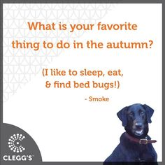 Learn about Clegg's #PestControl service or more about our #BedBug #Dogs by selecting the link in our profile. Locations across the #Southeast! #raleighnc #charlottenc #ashvillenc #winstonsalem #wilmingtonnc #northcarolina #carolinas #northcarolinaliving #pestcontrolservice #pest #insect #insects #bug #bugs #bedbugs #doglover #dogslife #dogsrule #dogsofinstagram #instagood  #labrador #carolinamom #happy #smile #fun