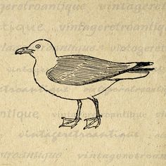 Printable Image Seagull Graphic Bird Illustration Download Digital Vintage Clip Art. Vintage high quality digital graphic. This printable digital artwork is high resolution for fabric transfers, making prints, and more great uses. This digital image is large and high quality, size 8½ x 11 inches. Transparent background version included with every graphic.