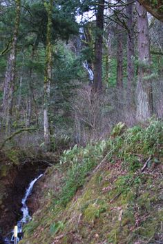Small unnamed falls along old highway 30, east of Latourell Falls.  Columbia Gorge, OR.  01/2014.