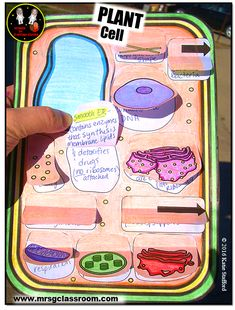 Plant cell model ideas will be an interesting school project in science class if you know how to tackle them – this specific subject is a challenging yet fun. A student might get confused if the teacher can't explain well on . Science Cells, Science Biology, Teaching Biology, Science Lessons, Science Education, Science Activities, Science Projects, Life Science, Ap Biology
