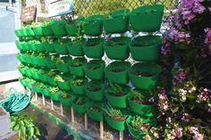 Woolly School Garden 2   Living Wall Planters | Woolly Pocket