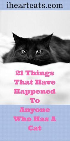 We think all you cat lovers can relate! I Love Cats, Crazy Cats, Cool Cats, Raising Kittens, Cats And Kittens, Ragdoll Cats, Kitty Cats, Cat Hacks, Cat Behavior