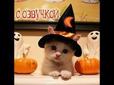 Кинозал сайта infoportal.lv - Рижский портал бесплатных объявлений Kitten Halloween Costumes, Pet Costumes, Halloween Cat, Happy Halloween, Woman Costumes, Couple Costumes, Pirate Costumes, Group Costumes, Couple Halloween