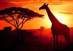 African Safari - Zimbabwe, Botswana, Mozambique, Tanzania, South Africa