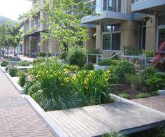 Swales as part of the stormwater management plan for Portland's South Waterfront. Landscape Plans, City Landscape, Urban Landscape, Landscape Architecture, Landscape Design, Garden Design, Sustainable City, Sustainable Design, Sp City