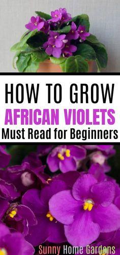 Garden Plants, Indoor Plants, Indoor Gardening, Flowering Plants, Container Gardening, Gardening Tips, Blog Art, Violet Plant, House Plant Care
