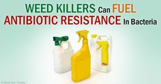 GE crops, pesticides, CAFOs, and the antibiotics used in livestock are the four components of our food system that are causing health and environmental problems. http://articles.mercola.com/sites/articles/archive/2015/04/07/cafos-gmos-antibiotics.aspx