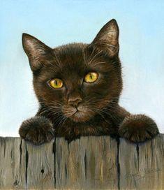 Cat Gallery | www.janetpidoux.co.uk