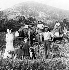 Gathering Hay, Bandera County,, Texas c1900. Photo courtesy of the Texas Historic Commission.