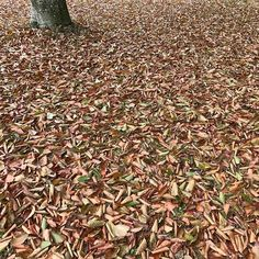 Fallcolors Bed And Breakfast, How To Dry Basil, Photos, Herbs, Instagram, Places, Pavilion, Pictures, Herb