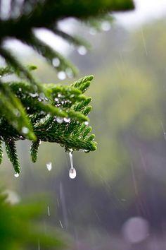 c1tylight5:  Raindrops on Leaves | Abhishek Khare