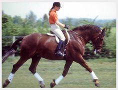 Oak Hill Irish Draught Horses and Sporthorses Breeders Horses for Sale Dressage Showjumping Eventing Hunter Jumper Dressage Horses, Draft Horses, Irish Draught Horse, Barn Renovation, Hunter Jumper, Horses For Sale, Show Jumping, Horse Stuff, Show Horses