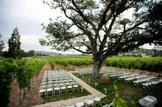 Southern Oregon Wedding Venue. Wedding Ceremony Inside the vineyard! Intimate!