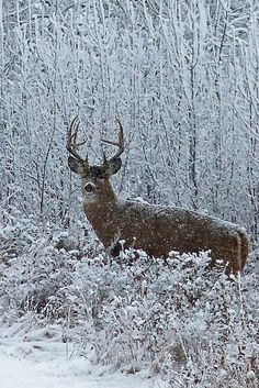 Hunting whitetails in snow. #Deer #Hunting