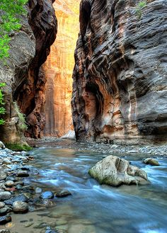 Zion Narrows, Zion National Park I want to go into the narrows so bad... just please no rain while im in there ha ha!