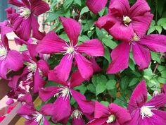 Tavasszal és ősszel a kertészkedők egyik legnagyobb dilemmája, hogy az egyes növényeket mikor és hogyan vágják vissza. Tavasszal vagy ősszel jobb metszeni? Általános válasz nem létezik arra a kérdésre, hogy mikor van a metszés... The post Mikor van a metszés ideje? – olvasó tapasztalatok appeared first on Balkonada. Plants, Plant, Planets