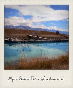 Alpine Salmon Farm, Mount Cook, via Flickr.