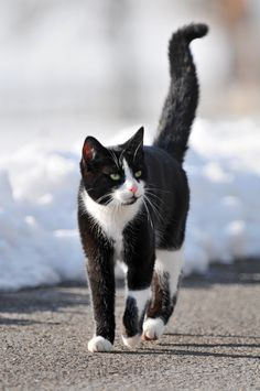 """A black and white cat walking towards me and looking at another cat. I like the lifted tail and the composition! :)  This is the 14th most interesting picture on Flickr matching """"cat"""" out of almost 6 million! ;)"""