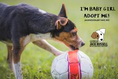 This Baby Girl has waited way too long! Let's find her a home. #AdoptTerrier