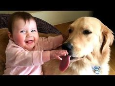 Funny Babies Laughing Hysterically at Dogs Compilation - Try Not to LAUGH… #funnypetvideos #funnyanimals