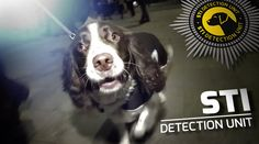 Dogs Sniff Out Herpes and Other STIs in This Mockumentary Cannes 2015, Activities, Dogs, Animals, Public Service, Addiction, Advertising, Youtube, News