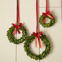 Inspiration for felting leaves Birch Lane Boxwood Wreaths with Red Ribbon Christmas Greenery, Christmas Colors, Christmas Holidays, Merry Christmas, Christmas 2017, Rustic Christmas, Happy Holidays, Office Christmas, Christmas Projects