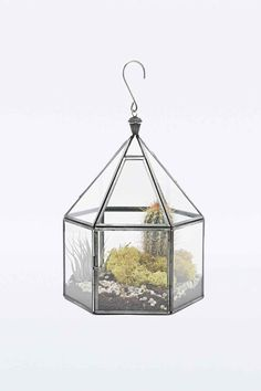 Urban Grow Hexagonal Terrarium