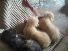 When they were four days old...:)