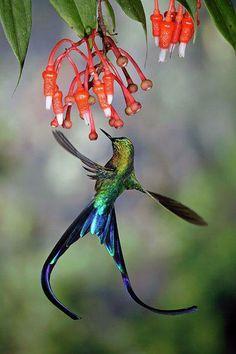 Amazing bird :)