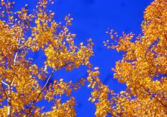 #RollinsCollege #Blue #Gold
