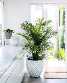 15 Low Maintenance Plants that are Safe for Cats ⋆ ] 15 Cat Safe Plants that are EASY to look after! These houseplants are cat-friendly and non-toxic. Find out which plants you can safetly grow Big Indoor Plants, Hanging Plants, Indoor Garden, Garden Pots, Terrace Garden, Outdoor Plants, Palm Plants, Indoor Plant Pots, Indoor Planters