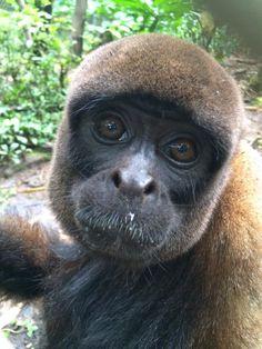 Volunteer with monkeys in Ecuador at an inspiring rescue centre Gap Year, Primates, Monkeys, Ecuador, Wildlife, Friends, Animals, Amigos, Rompers