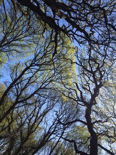 #Southampton Common #trees #nature #buesky
