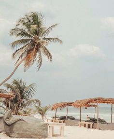 Tropical Beaches With Palm Trees