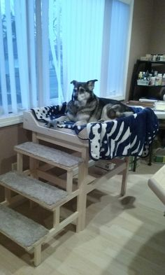 """33""""Hx56""""Lx26""""W dog perch, dog window seat, sick dog crib, dog throne, dog chill pad, raised dog bed, dog bed with steps. Made this for my pup out of select pine boards. Tools needed: miter saw, screwdriver, doweling jig, Supplies: clamps, drill bits, wood glue, screws"""
