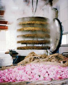 Perfume making Grasse