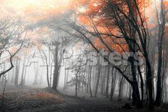 Autumn Woods Landscapes Photographic Print - 61 x 41 cm