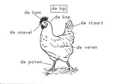 Op de boerderij -- de kip