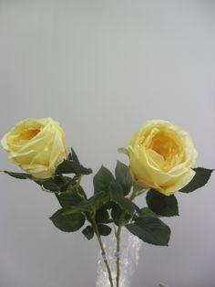 Rosa Feliz Amarela