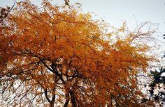 #autumn #yellow
