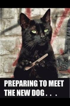 Sharpen my nails prepaid to scratch lol !