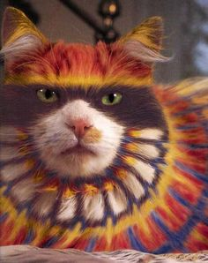 Carnival cat doesn't look very pleased....