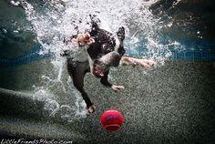 Boston Terrier Underwater