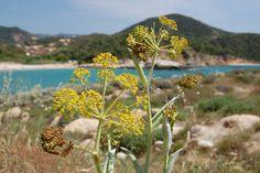 Chia, Sardegna