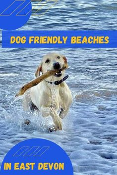 Some beaches allow dogs all year round and are just a short drive from our holiday park, others will have restrictions between May and October all details can be found on the website. Monmouth Beach, Dog Friendly Holidays, Lyme Regis, Jacob's Ladder, Pet Dogs, Pets, Holiday Park, Dog Beach, Dog Walking