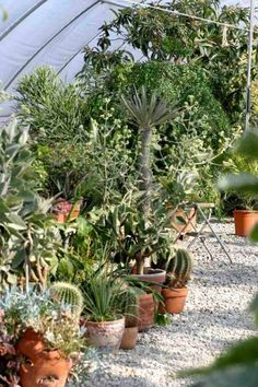 aménagement jardin méditerranéen avec végétation abondante ...